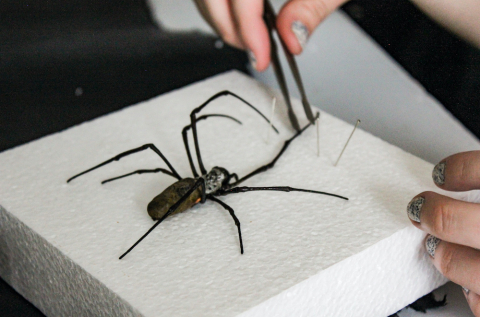 Spiders and Scorpions Class