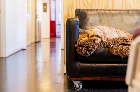 Dog friendly office for friendly dogs